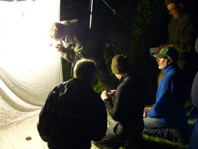04_Nachtvlinderexcursie