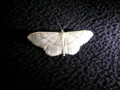 18_Nachtvlinder